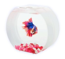 "Аквариум AA-Aquariums ""Betta О"", 1,4л, розовый"