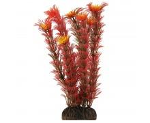 """Растение Laguna 1999 """"Амбулия"""" красная, 200мм, (пакет)"""